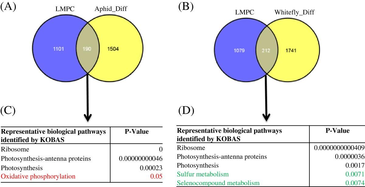 Comparative Transcriptome Analysis Of Gossypium Hirsutuml In