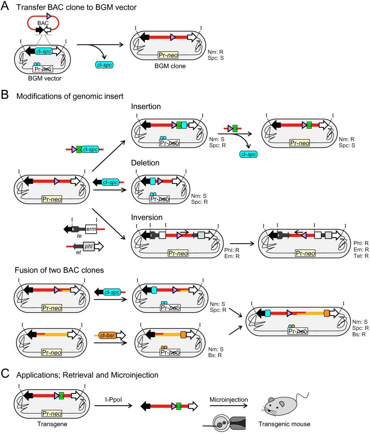 Bacillus Subtilis Genome Vector Based Complete Manipulation And Block Diagram Figure 1