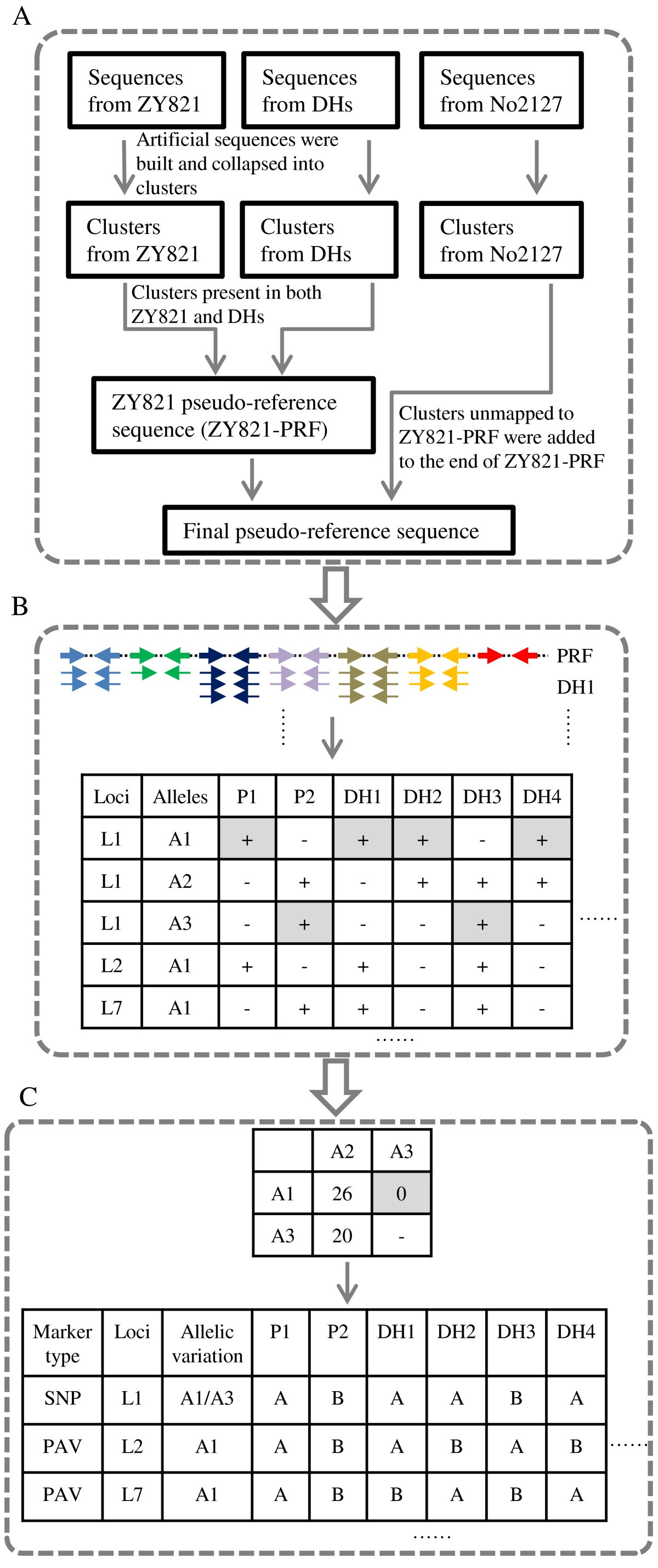 Detection And Genotyping Of Restriction Fragment Associated Xl Axis Rp 50000 Figure 2