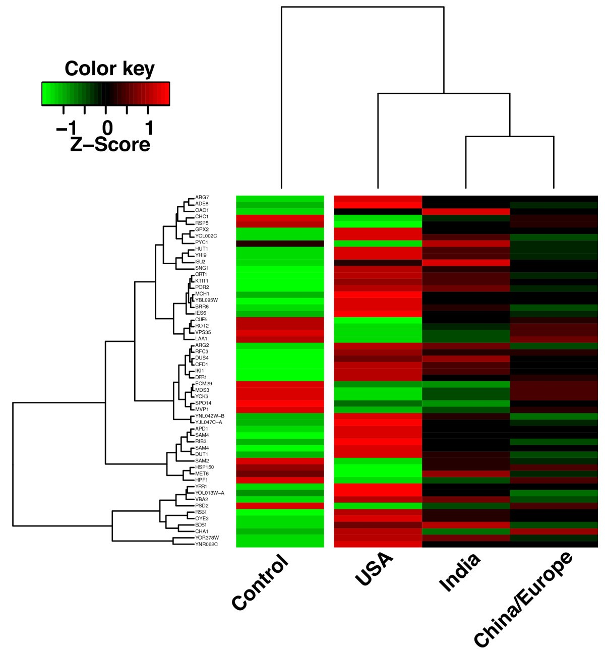 The Saccharomyces cerevisiae transcriptome as a mirror of ...