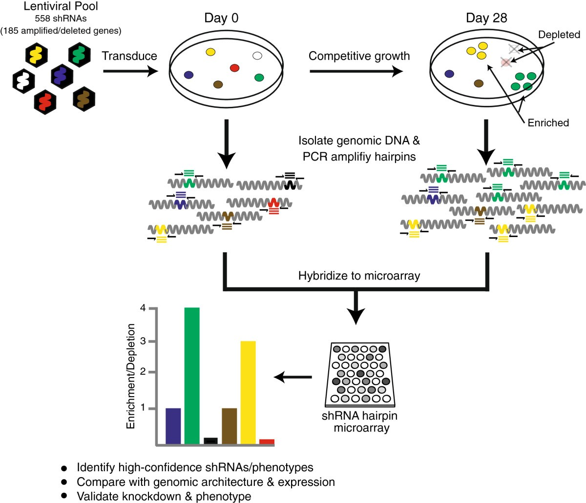 Integrative genomic and functional profiling of the pancreatic ...