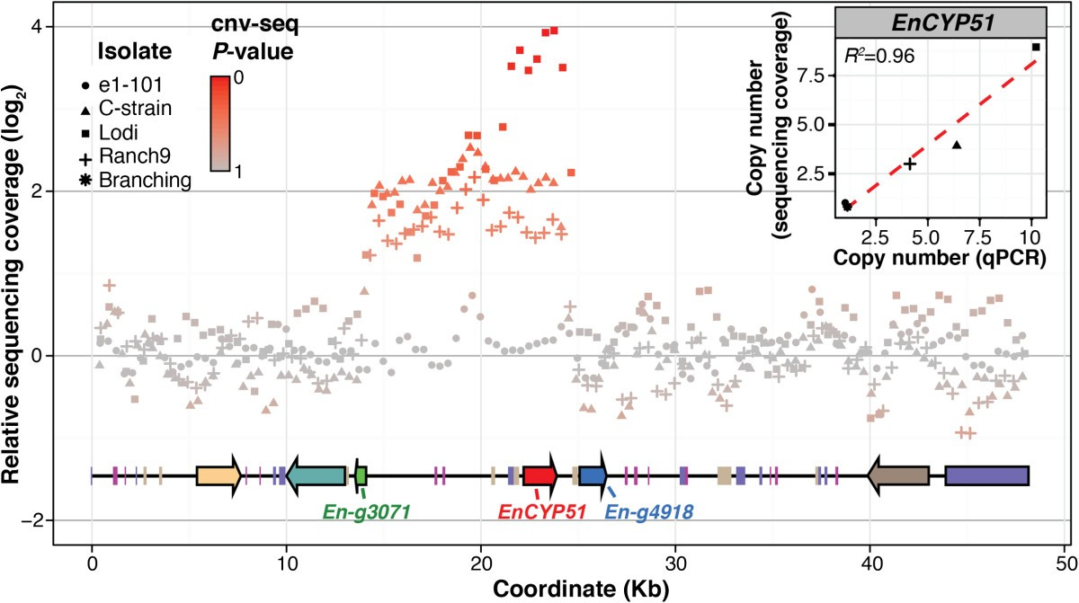 Adaptive Genomic Structural Variation In The Grape Powdery Mildew Sp Schematicjpg 630 Kb 2733 Views Figure 3