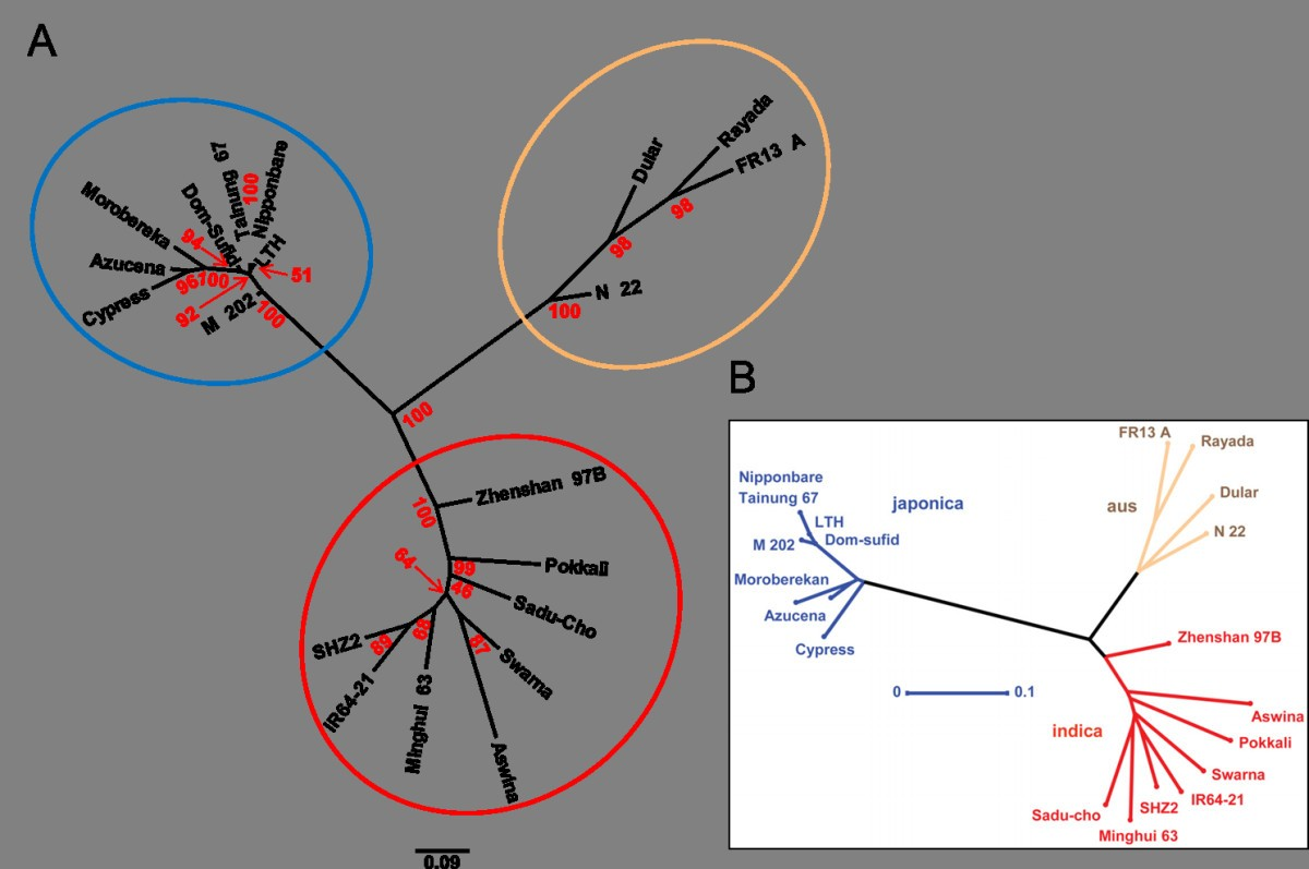 SNPhylo: a pipeline to construct a phylogenetic tree from huge SNP data