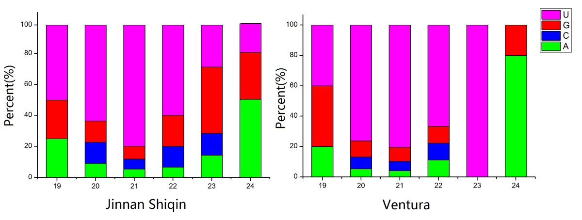 High throughput sequencing of two celery varieties small RNAs