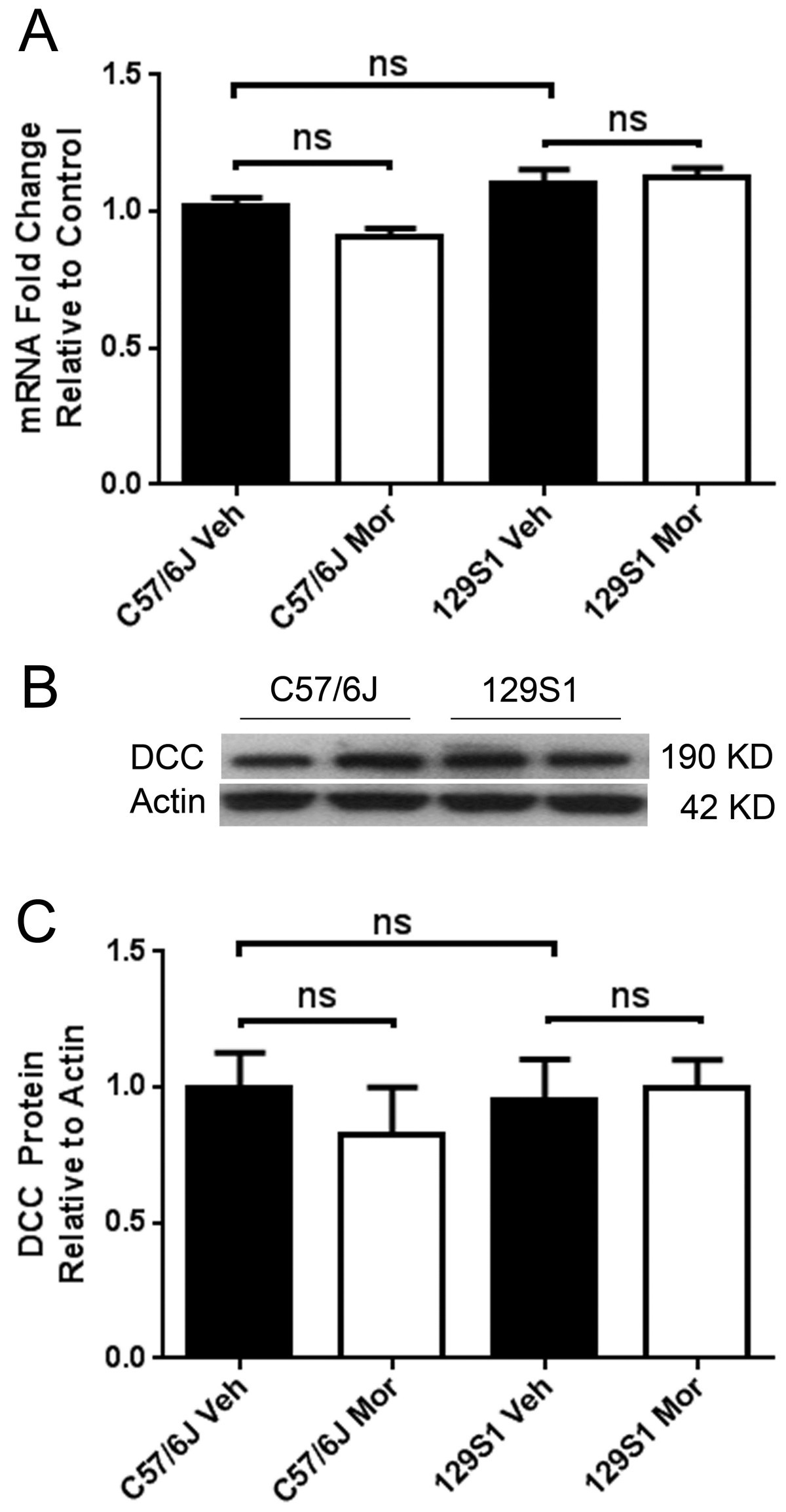 The Netrin-1 receptor DCC is a regulator of maladaptive responses to