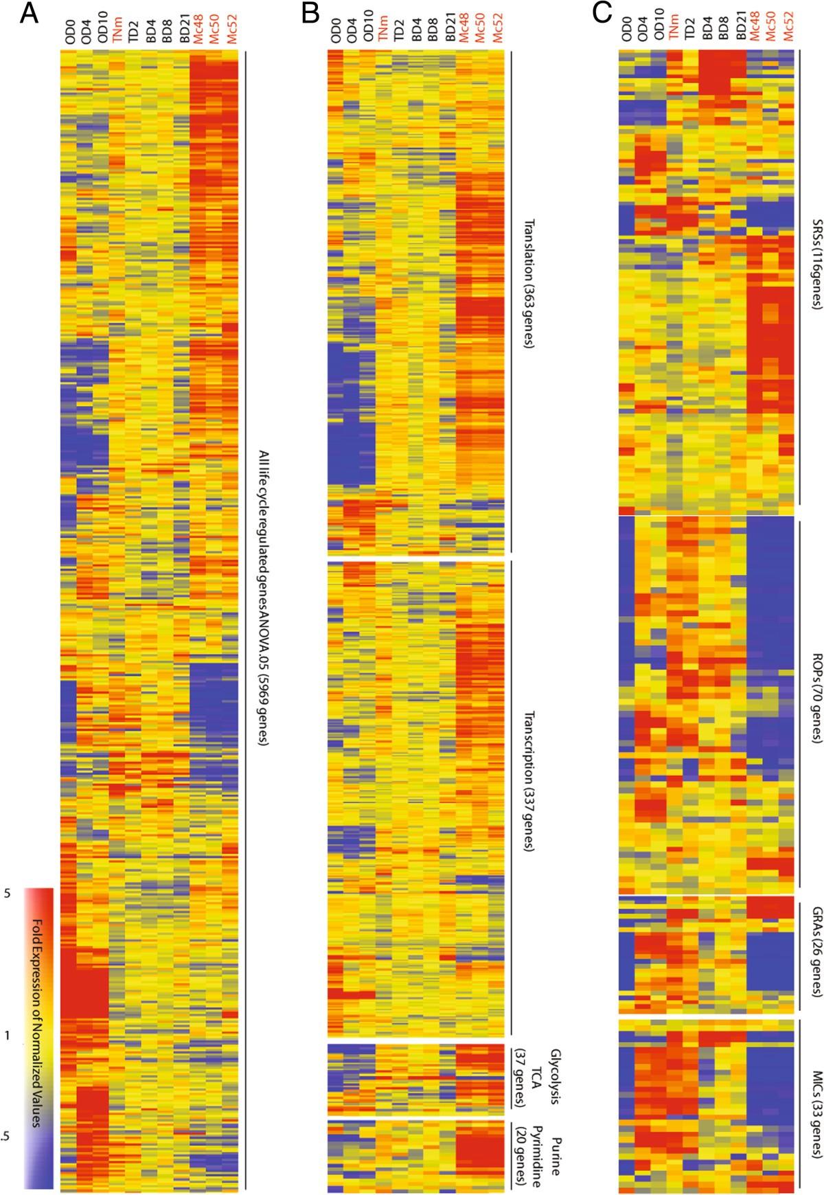Toxoplasma gondii merozoite gene expression analysis with parison