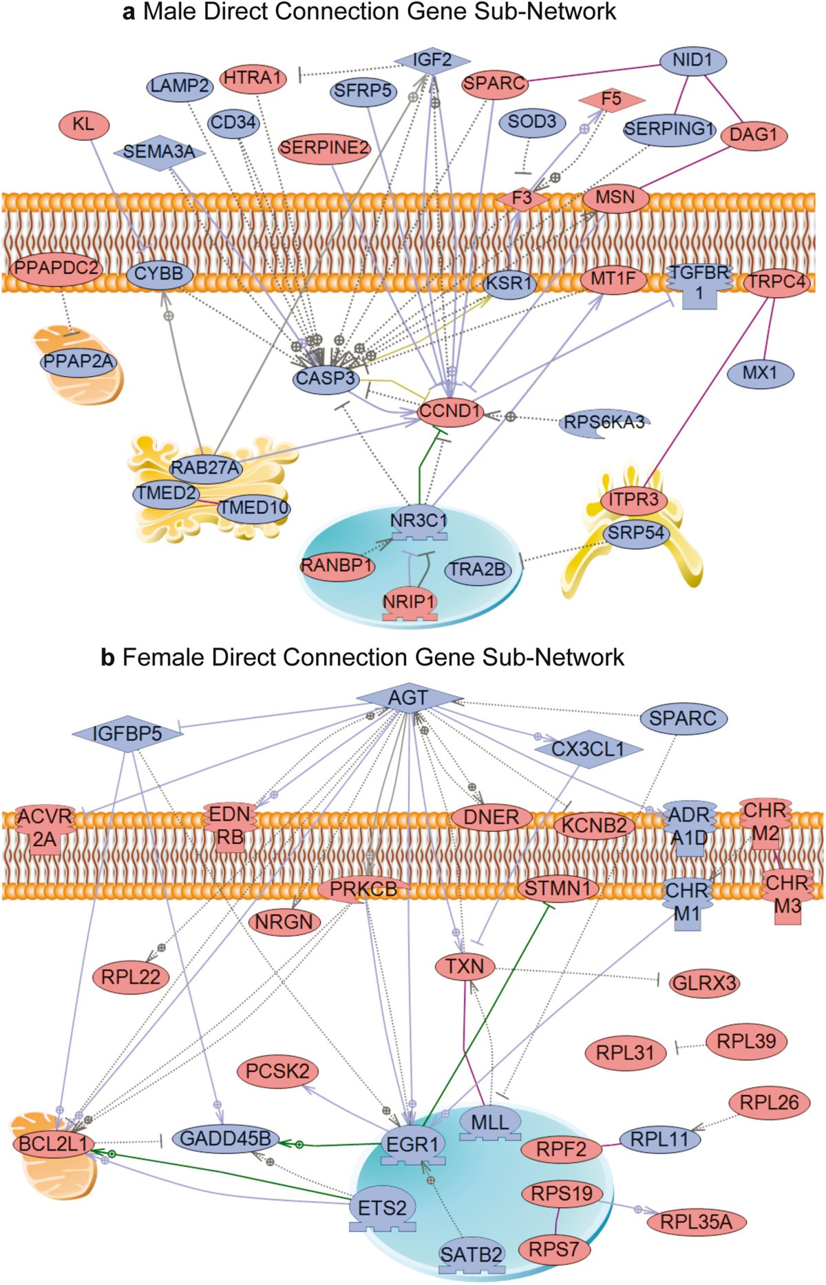 Gene Bionetworks Involved In The Epigenetic Transgenerational 1987 S10 2 5 Wire Diagram Figure 4