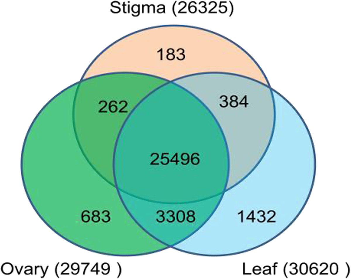 The large-scale investigation of gene expression in Leymus chinensis ...