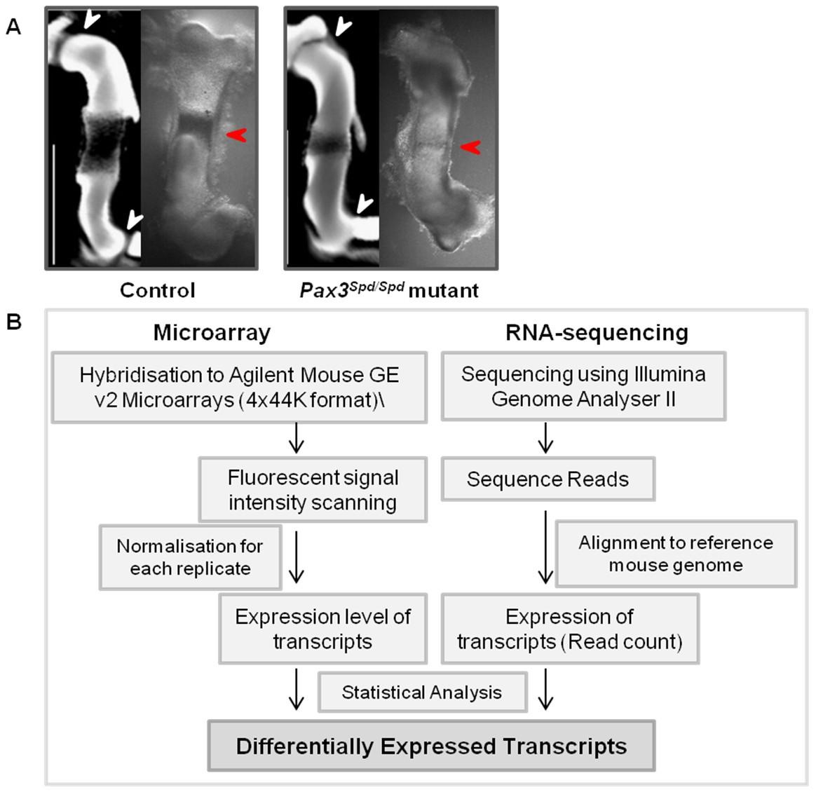 Identification Of Mechanosensitive Genes During Skeletal Development Circuit Medic 2013110 Base Board Repair Kit Figure 1