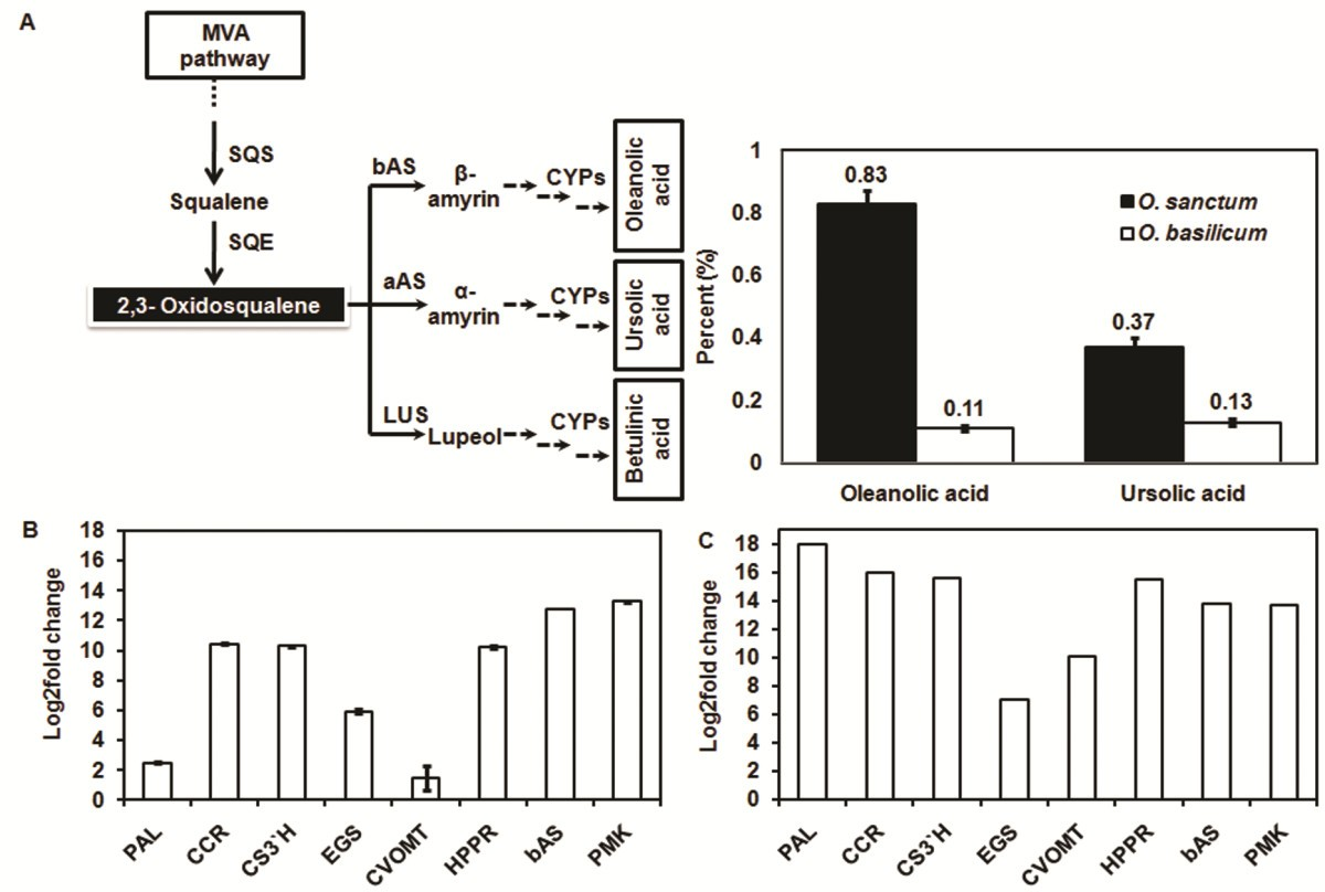 De Novo Sequencing And Comparative Analysis Of Holy Sweet Basil Component Major Connector Location Diagram 124kb Figure 7