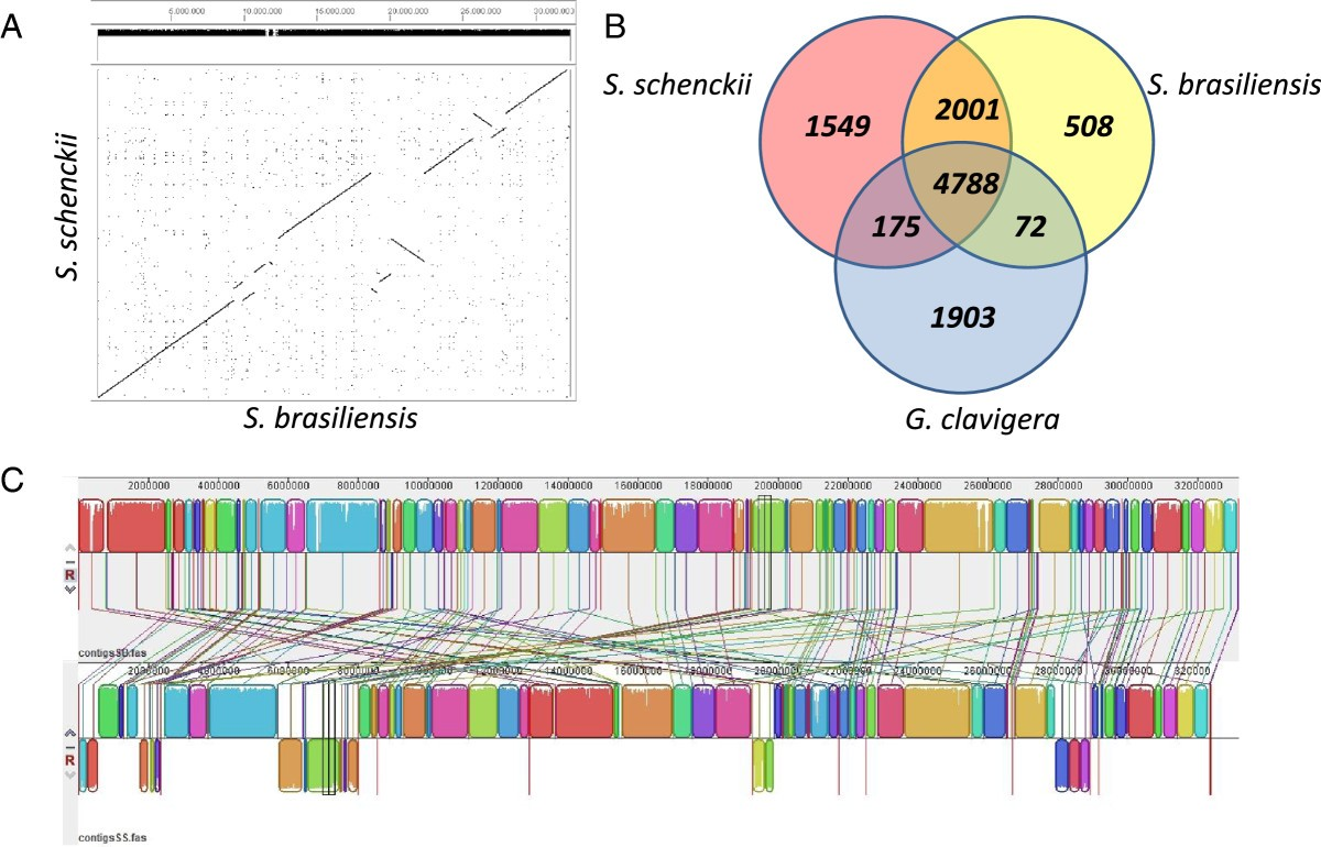 Comparative Genomics Of The Major Fungal Agents Human And Animal Secondary Double Glazing Facts Gt System Diagram Figure 1