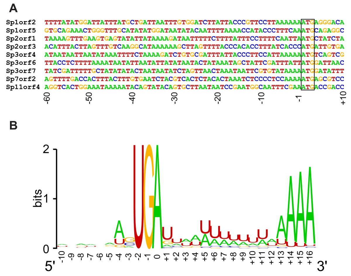 A Genomic Survey Of The Fish Parasite Spironucleus Salmonicida