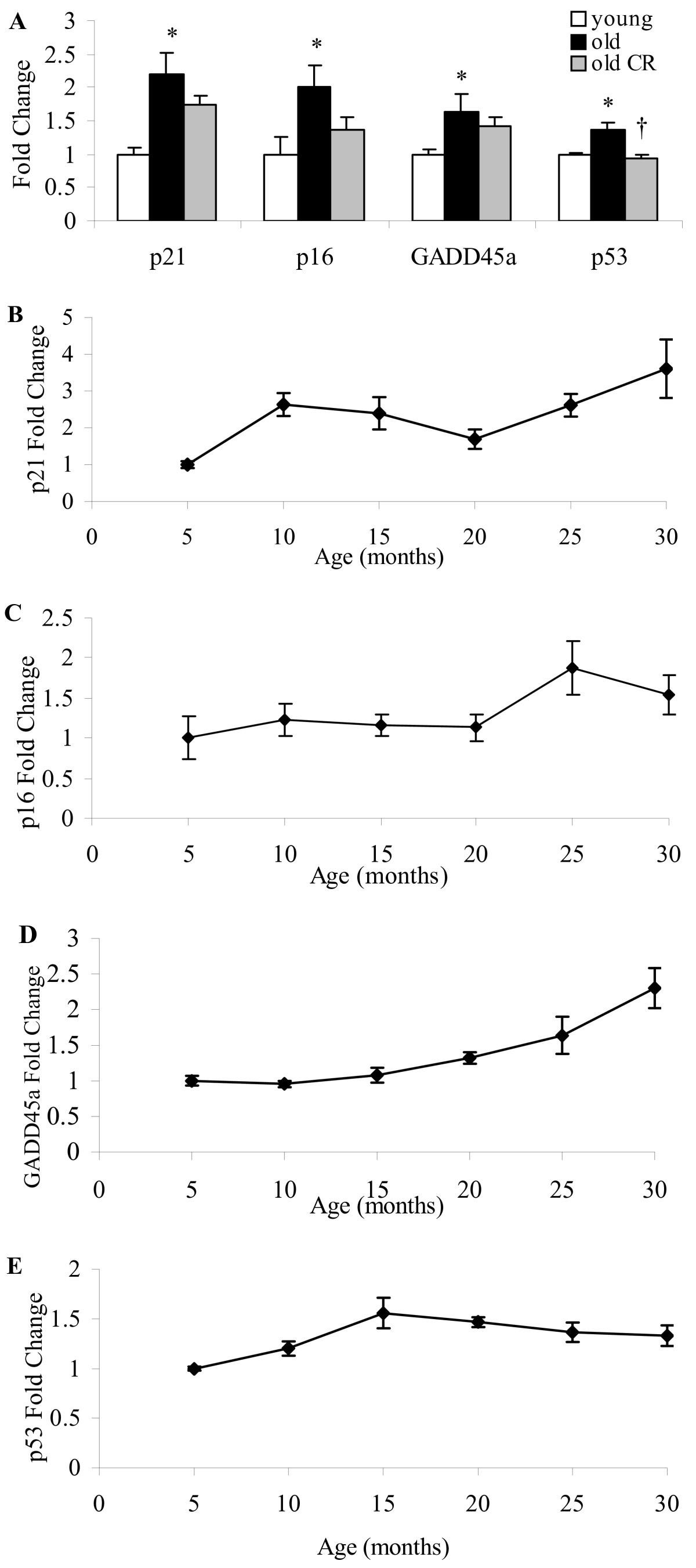 Gene Expression Profiling Of Aging Reveals Activation Of A P53