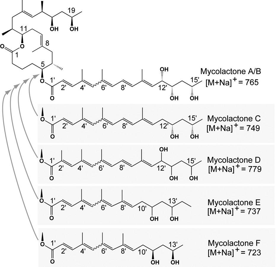 Deciphering The Genetic Basis For Polyketide Variation Among 4 Way Switch Grainger Figure 1