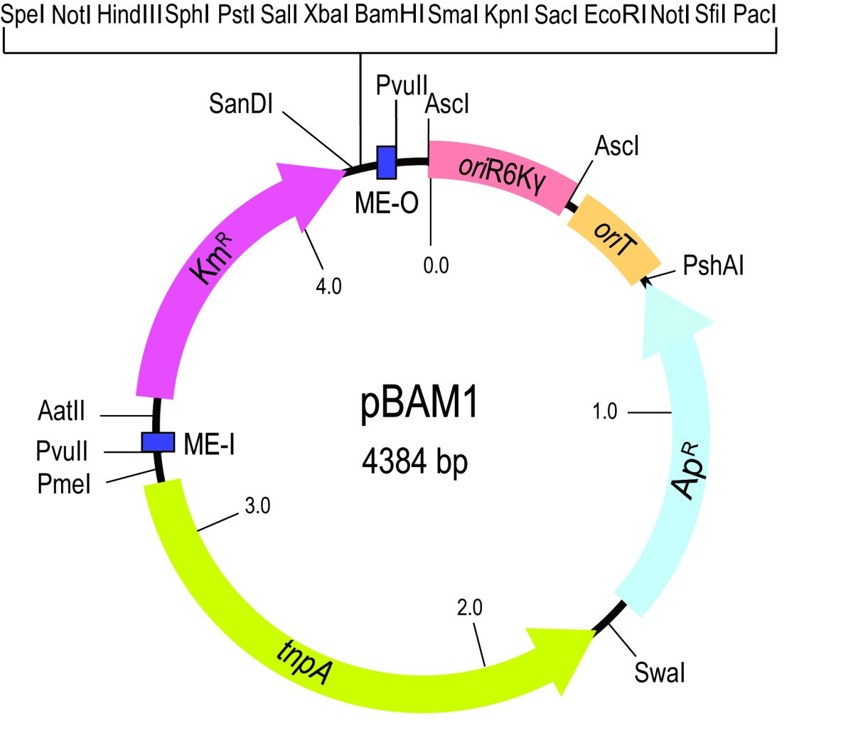 Pbam1 An All Synthetic Genetic Tool For Analysis And Construction Figure 1 Power Electronics Platform Block Diagram