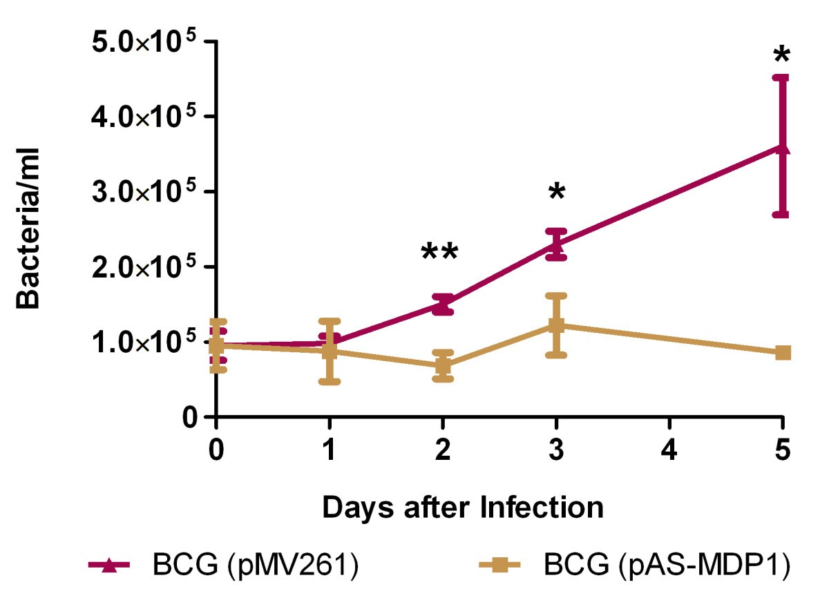 The role of the mycobacterial DNA-binding protein 1 (MDP1) from ...