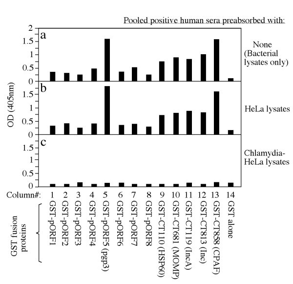 Antibodies from women urogenitally infected with C  trachomatis