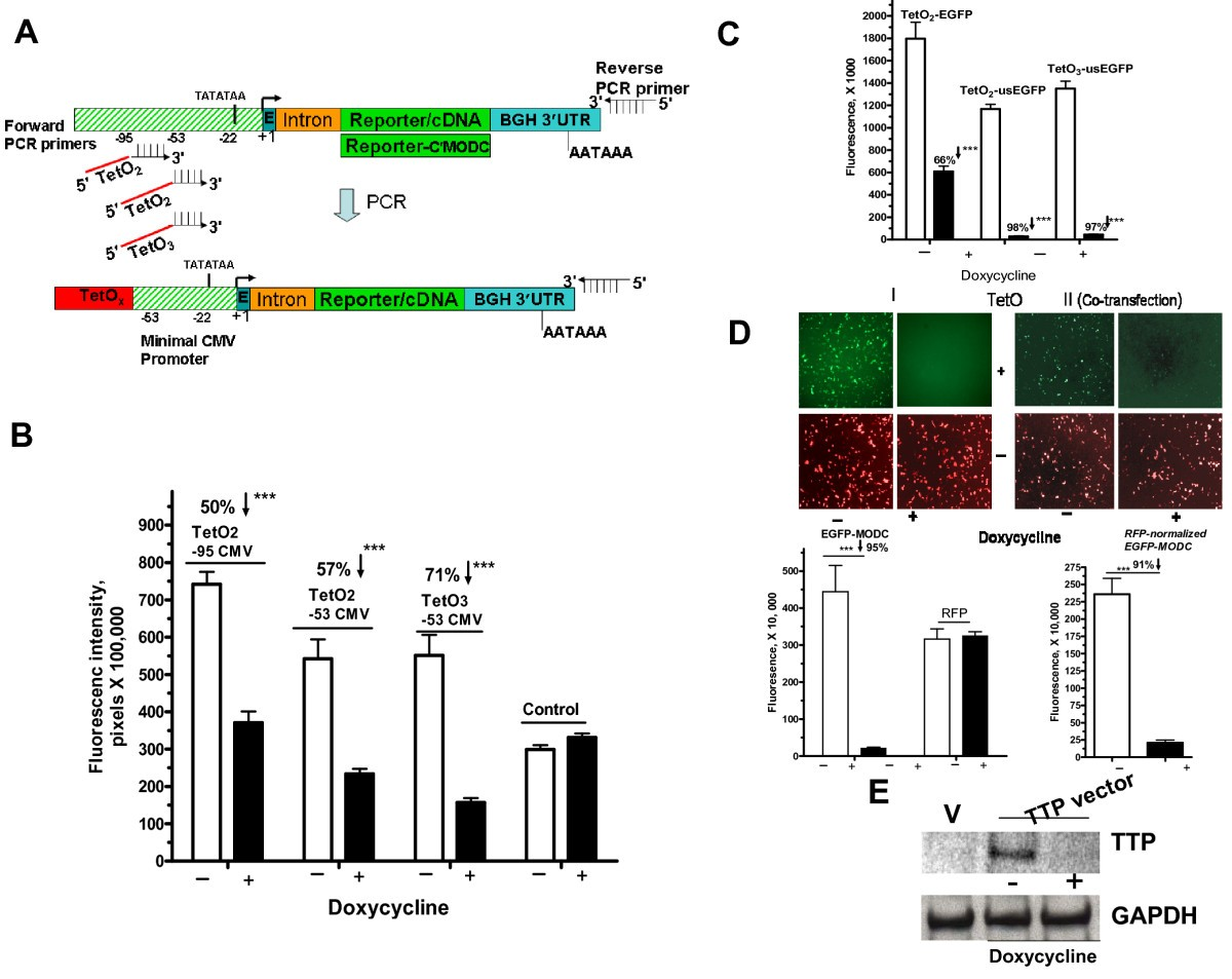 lactobacillus acidophilus gapdh cloning and expression Probiotics (lactobacillus rhamnosus r0011 and acidophilus r0052) reduce the expression of toll-like receptor 4 in mice with alcoholic liver diseasemeegun hong , ¶ ‡ mh, swk, and shh contributed equally to this work.