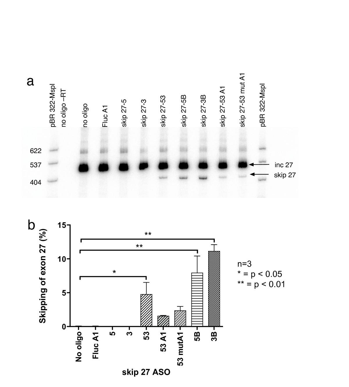 Antisense Oligonucleotide Induced Alternative Splicing Of The Apob Pna L Block Diagram Figure 2