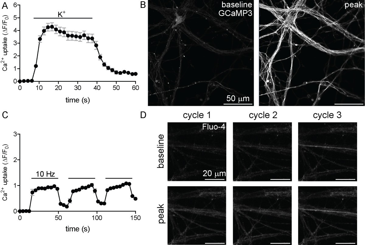 High Yield Derivation Of Enriched Glutamatergic Neurons From 1009 Military Wiring Harness Diagram Figure 7