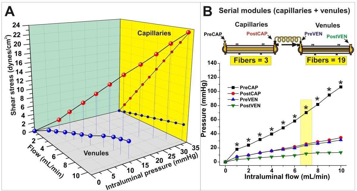 A New Dynamic In Vitro Modular Capillaries Venules Modular System