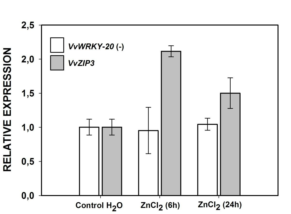 ed08456870f3 Characterization of a putative grapevine Zn transporter