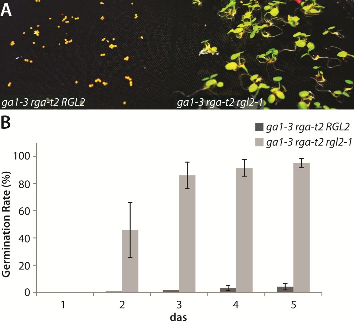 Insights Into The Molecular Mechanism Of Rgl2 Mediated Inhibition Sprouting Seed Diagram Germination Images Google Search Might Figure 1 A Mutation In Can Rescue Non Germinating