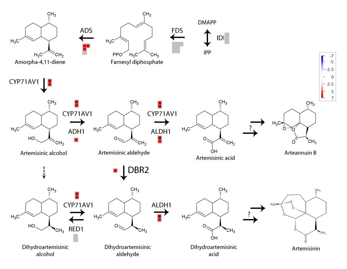 Differential Transcriptome Analysis Of Glandular And Filamentous Mk 5894 Figure 3