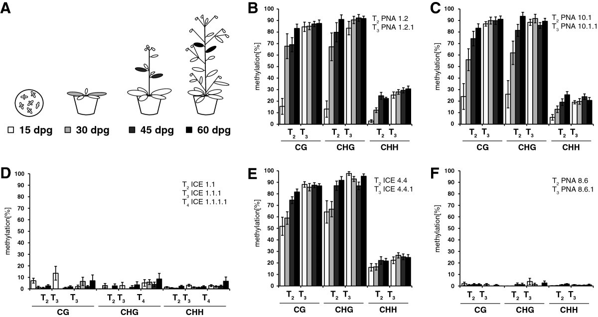 Progressive 35s Promoter Methylation Increases Rapidly During