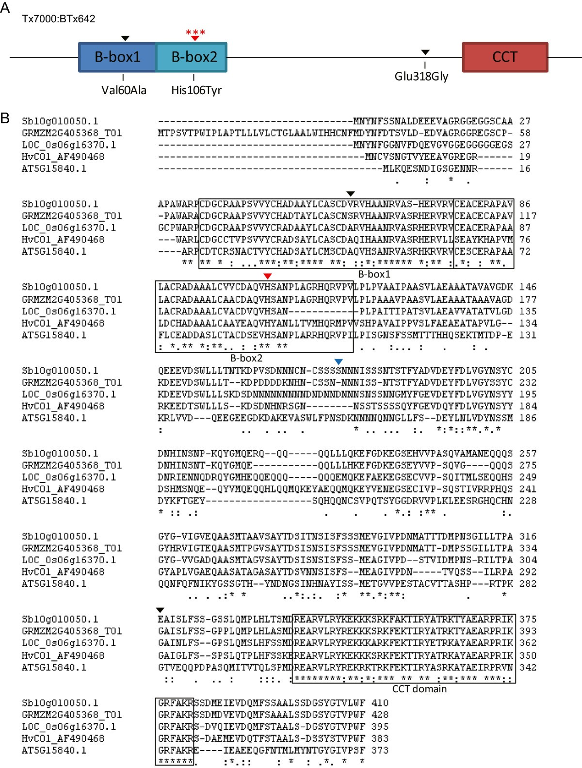 1d5b29c566 CONSTANS is a photoperiod regulated activator of flowering in ...