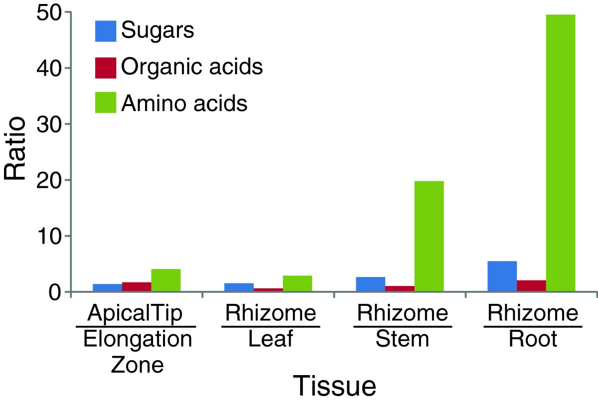A Systems Wide Comparison Of Red Rice Oryza Longistaminata Tissues Yz 125 Engine Diagram Figure 9