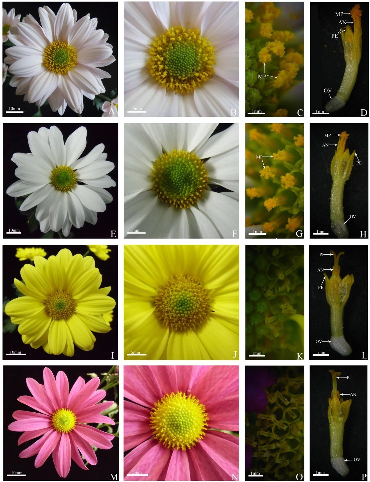 Factors affecting quantity of pollen dispersal of spray cut figure 1 izmirmasajfo