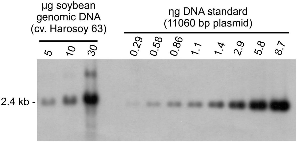 Gene amplification of the Hps locus in Glycine max | BMC Plant ...