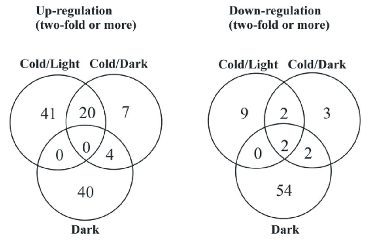 Light Has A Specific Role In Modulating Arabidopsis Gene Expression Dark Activated Relay Figure 3