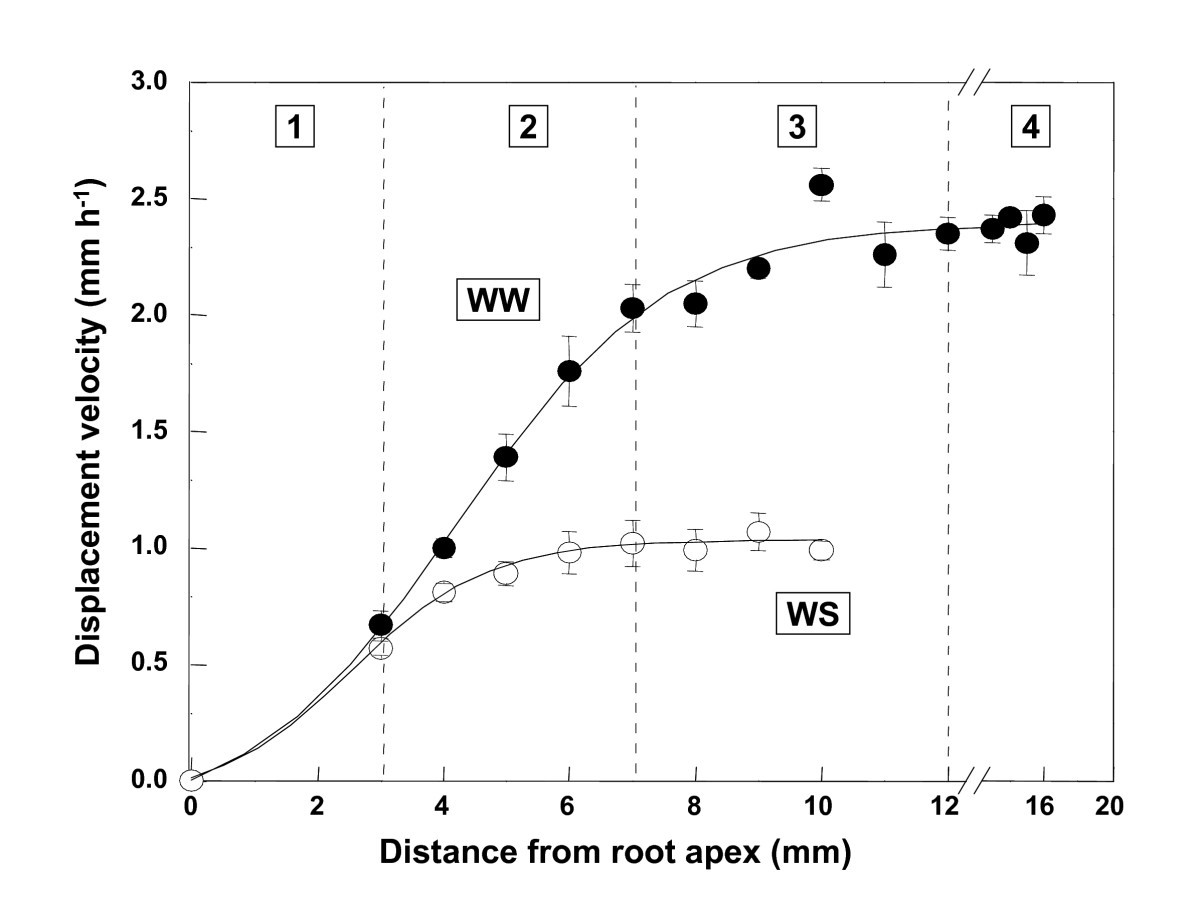 Spatial Distribution Of Transcript Changes In The Maize Primary Root Still Diagram Rectifying Plant For Purifying Figure 1