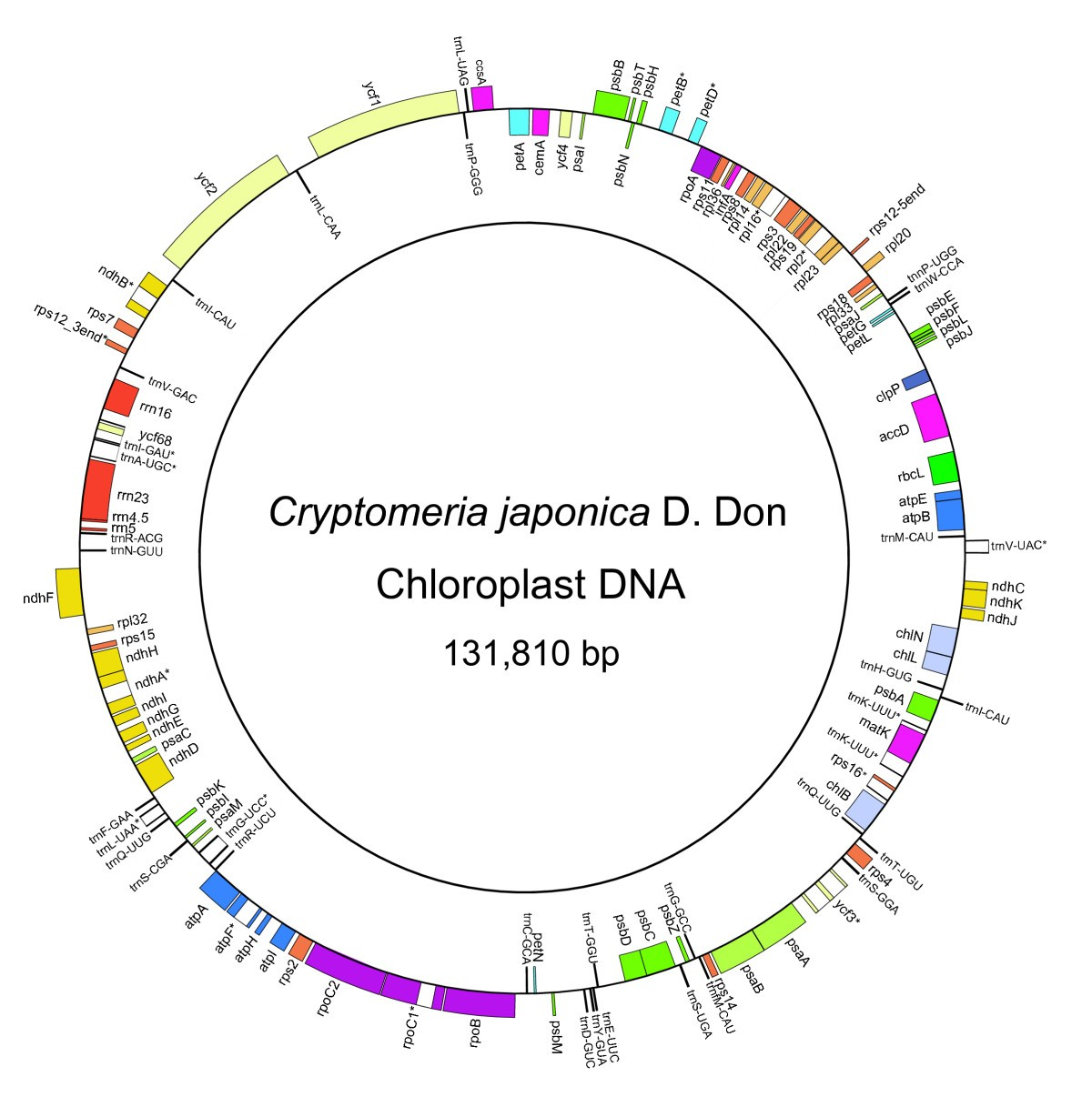 Complete nucleotide sequence of the cryptomeria japonicad don figure 1 ccuart Gallery