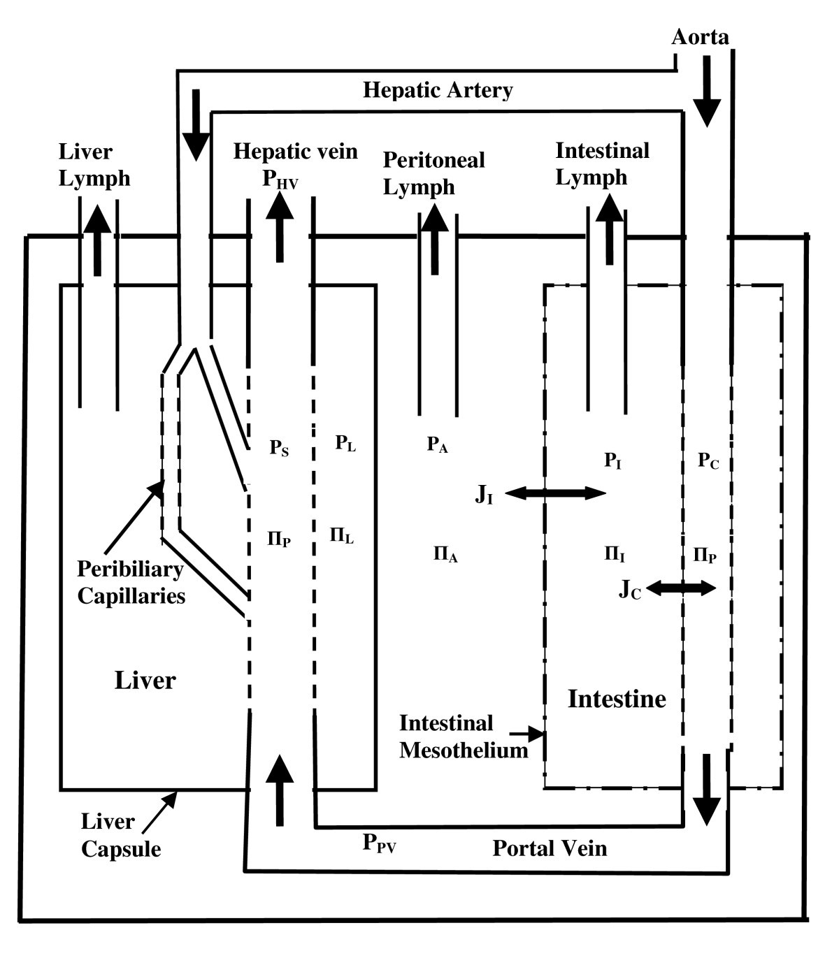 Quantitative Modeling Of The Physiology Ascites In Portal Figure1 Cell Phone Jammer Circuit Diagram Figure 1 Schematic