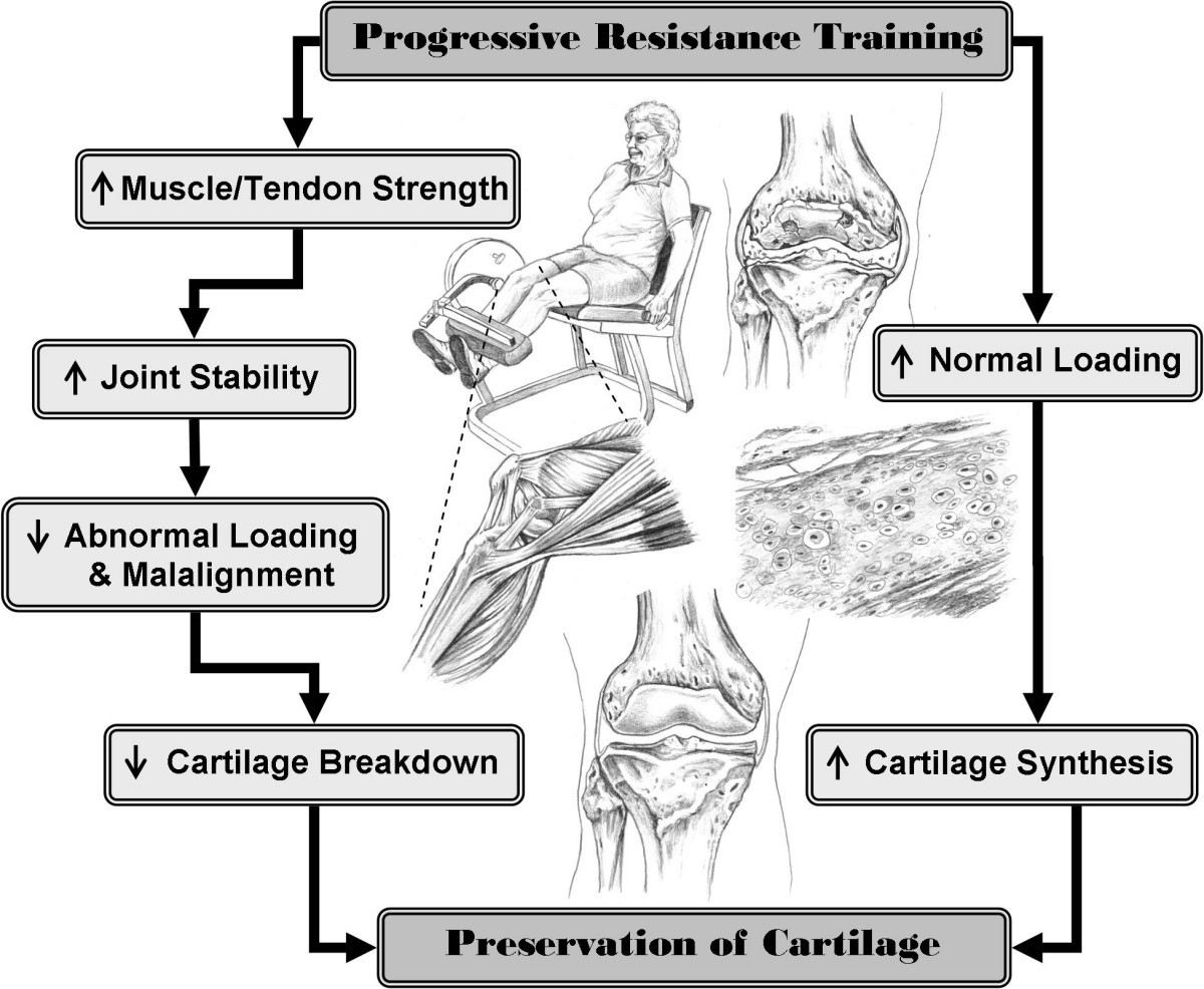 Resistive Exercise For Arthritic Cartilage Health Reach A One Healthy Breakdown Do This Circuit Few Times Week Strong Figure 1