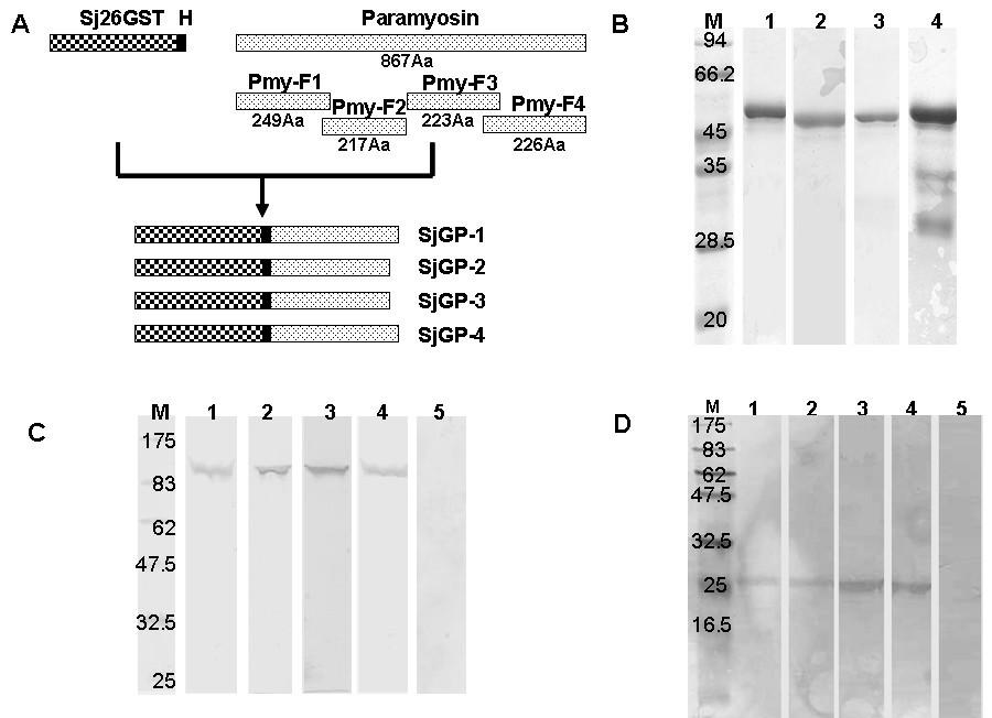A schistosoma japonicumchimeric protein with a novel adjuvant figure 1 malvernweather Choice Image