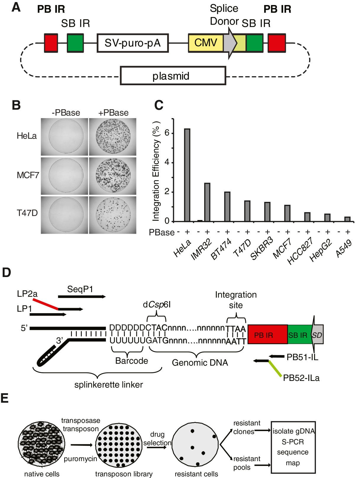 Transposon activation mutagenesis as a screening tool for identifying resistance to cancer therapeutics