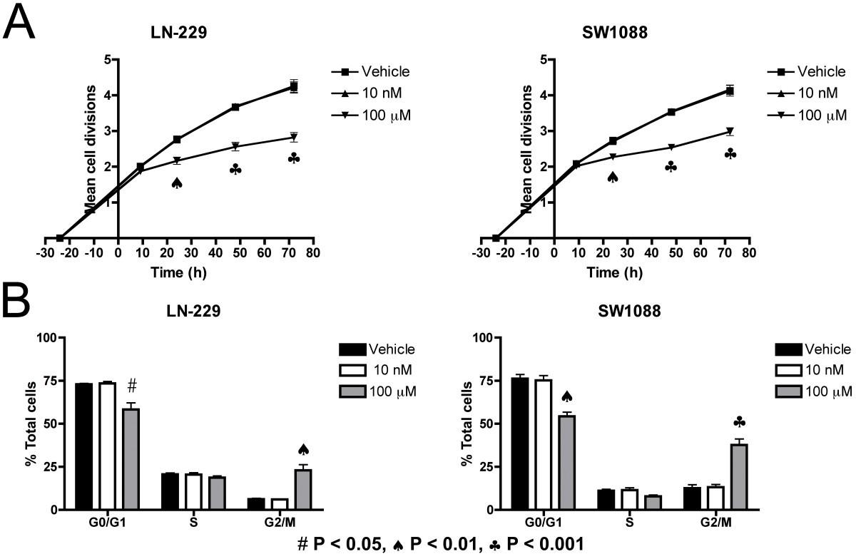 Endothelin Receptor B Antagonists Decrease Glioma Cell Viability Ttc M Block Diagram Figure 2