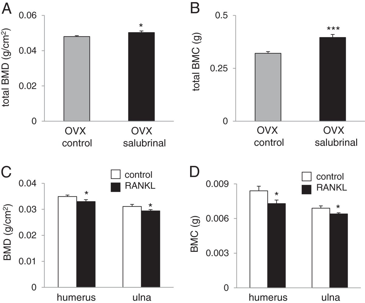Effects of salubrinal on development of osteoclasts and osteoblasts ...