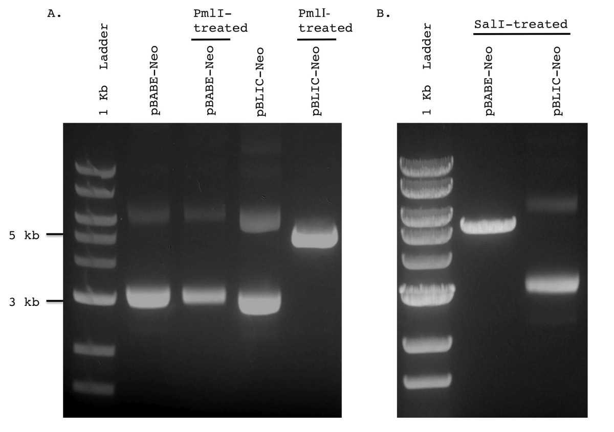 Creation And Validation Of A Ligation Independent Cloning