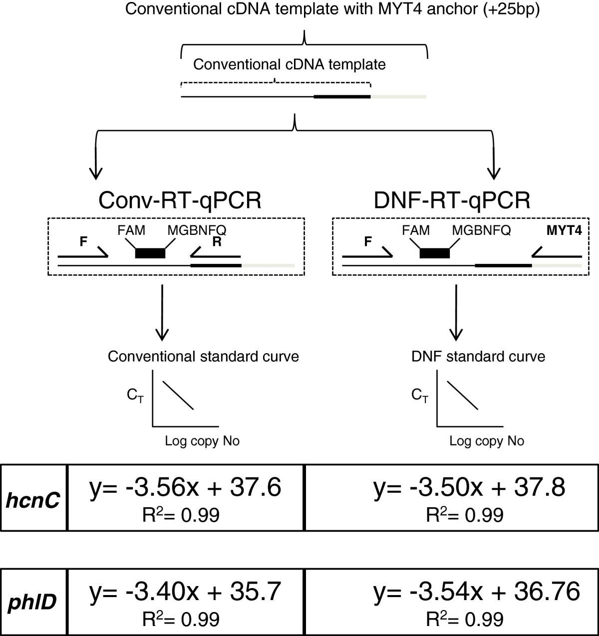 Development of a versatile TaqMan™ real-time quantitative PCR (RT ...