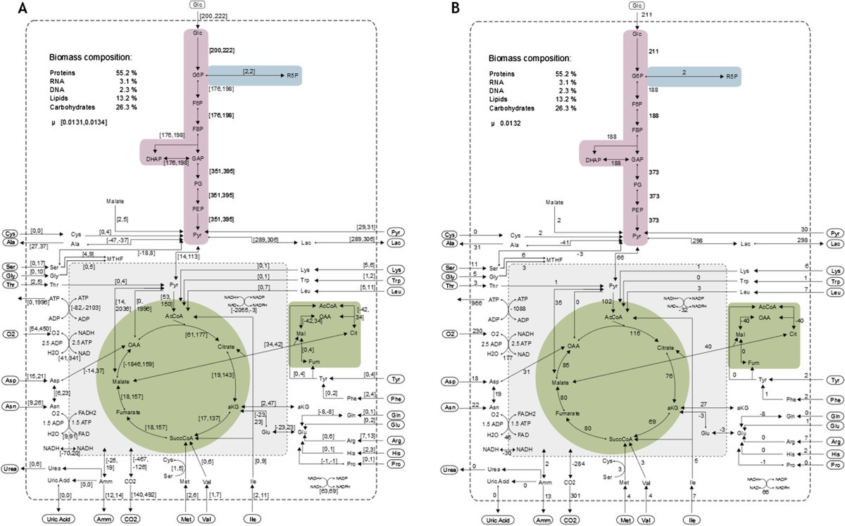 The Avian Cell Line Age1crpix Characterized By Metabolic Flux Kc 135 Engineering Schematics Figure 1