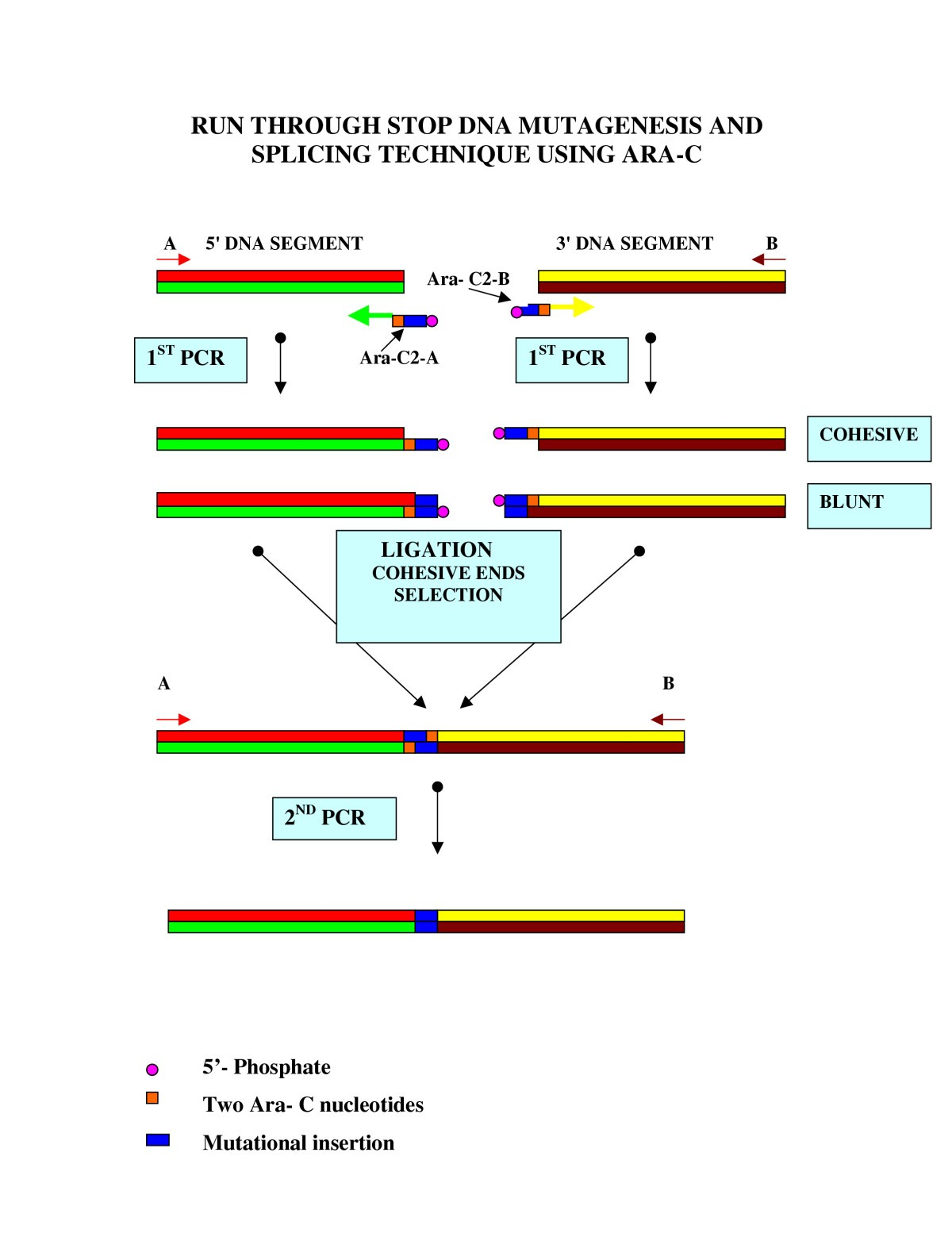 Description of a pcr based technique for dna splicing and figure 2 ccuart Gallery