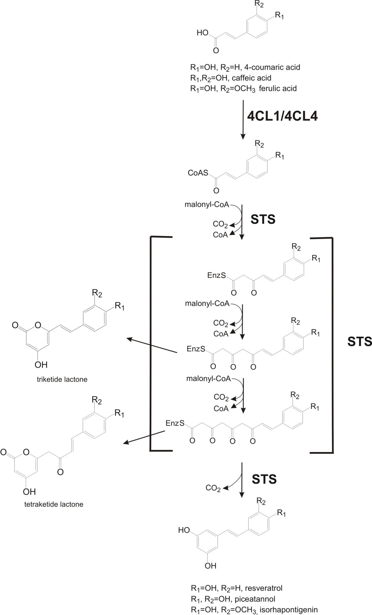 Biosynthesis Of Plant Specific Stilbene Polyketides In Metabolically 2r Ladder D A Converter Circuit Performance Optimization For Mixed Figure 1