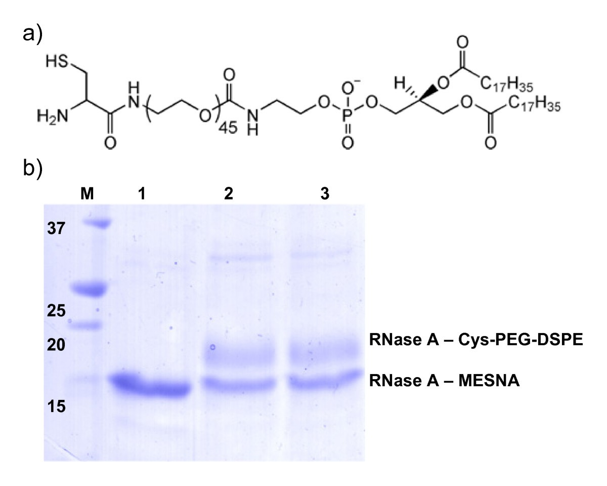 One-step refolding and purification of disulfide-containing proteins ...
