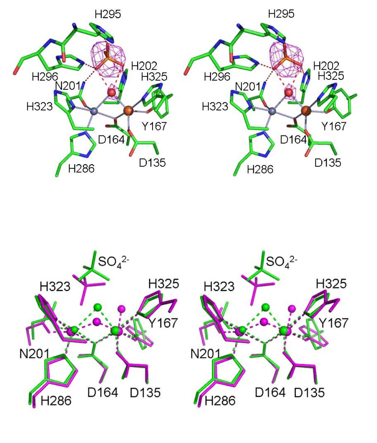 Crystal structures of a purple acid phosphatase, representing ...