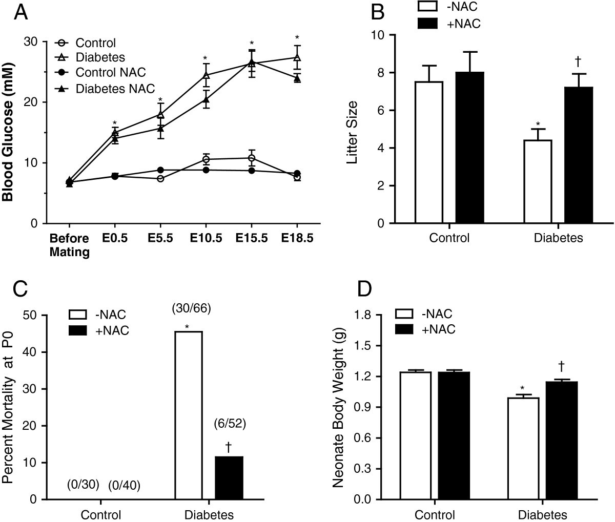 N-Acetylcysteine prevents congenital heart defects induced by ... 03ee2ea970